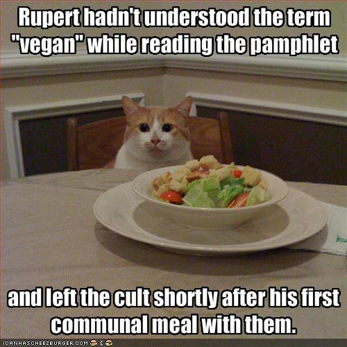 funny-pictures-cat-does-not-want-this-vegan-meal2.jpg